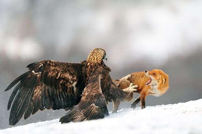 Красиві фотографії тварин (40 фото)