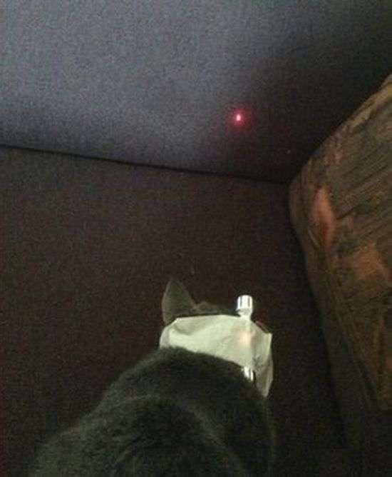 Як влаштувати погром у будинку за допомогою кота (2 фото)