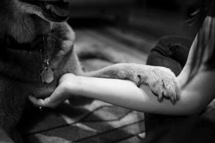 Зворушливе прощання (24 фото)