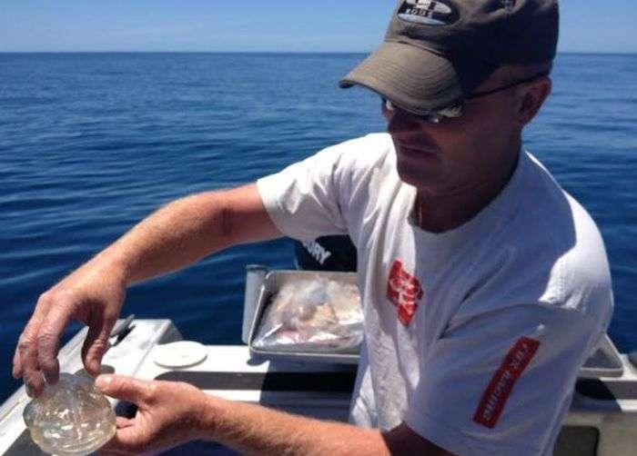 Дуже незвичайний улов біля берегів Нової Зеландії (3 фото)