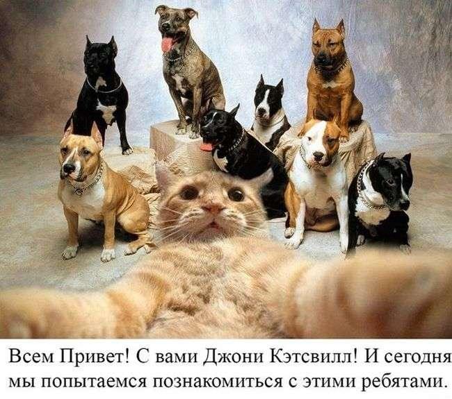Новий інтернет-мем - Джонні Кэтсвилл (52 фото)