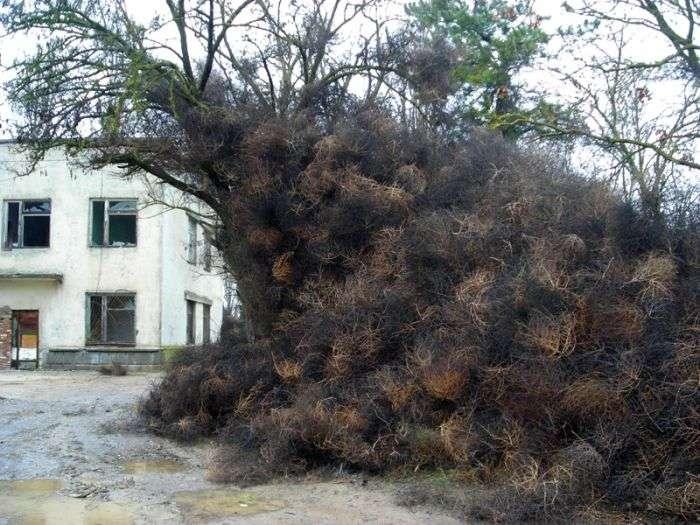 Перекоти-поле захопили кримське селище (8 фото)