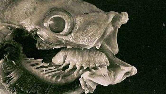 ТОП-25 найбільш небезпечних для життя паразитів (25 фото)