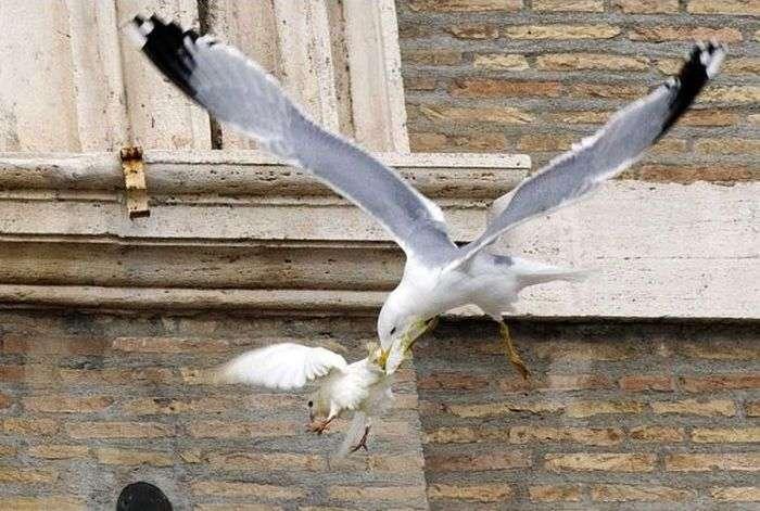 Папа Римський випустив голубів миру після звернення до жителів України (4 фото)