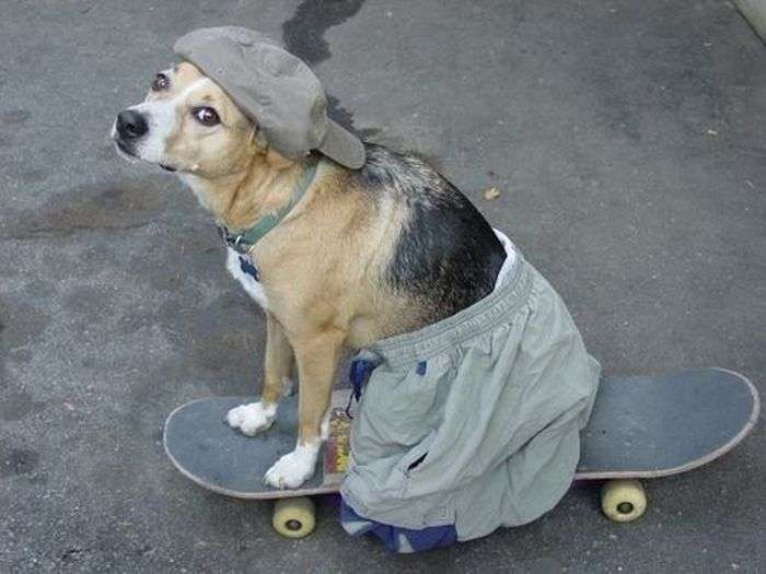 Прикольні та смішні знімки собак за 2013 рік (39 фото)