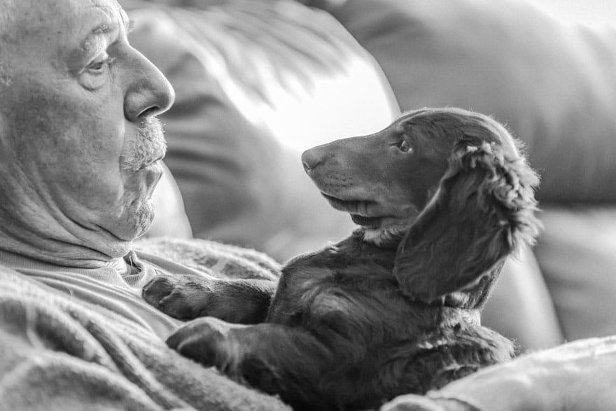 10 лучших фото собак, сделанных в 2019 году. Приготовьтесь, это слишком очаровательно Приколы,лучшее,люди,собаки,фото,фотографии