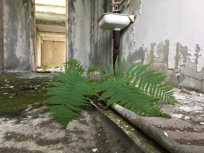 Природа поглощает территорию вокруг Чернобыля Интересное