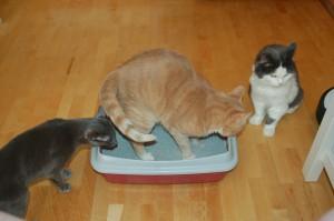 10 признаков того, что ваша кошка испытывает боль болезни,домашние животные,домашние питомцы,здоровье,кошки и коты,медицина