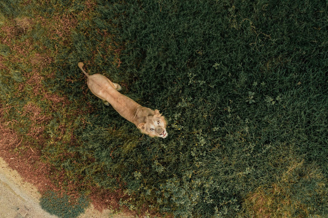 Победители конкурса Dronestagram: лучшие снимки с высоты искусство