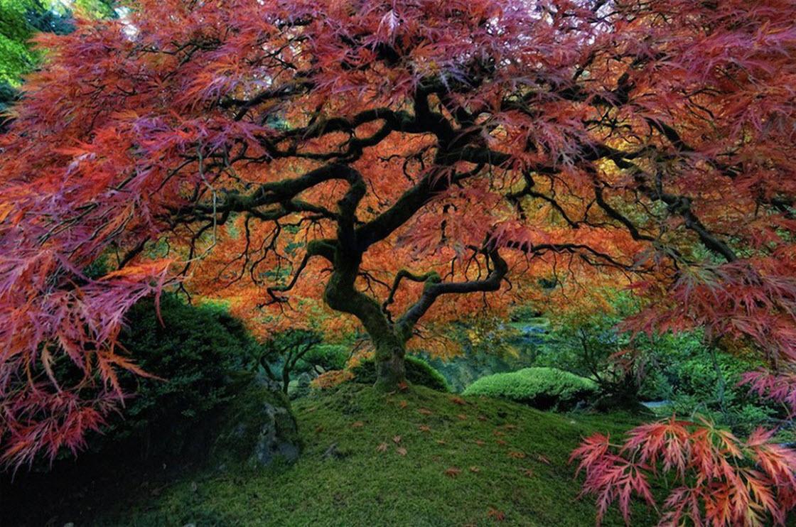 Самые красивые деревья в мире природа