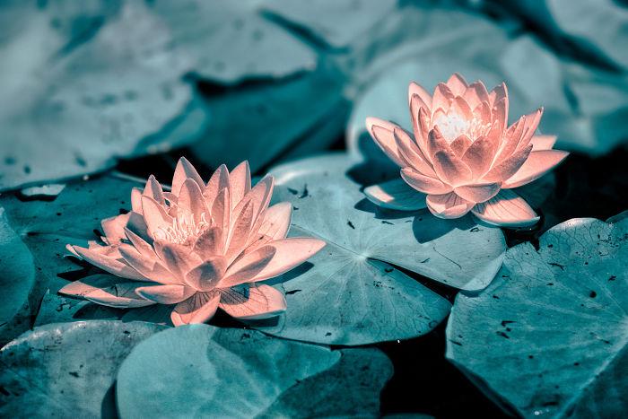 И еще чуть-чуть красоты от Янна Филиппа красота