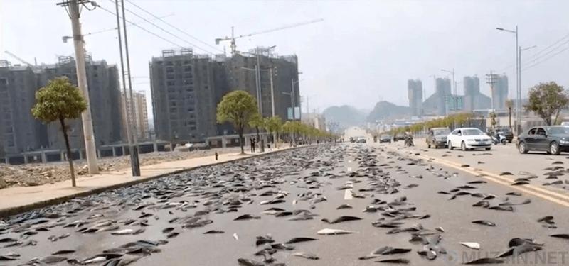 Lluvia De Peces: божественный рыбный дождь, который случается в небольшом городе в Гондурасе каждый год Познавательное