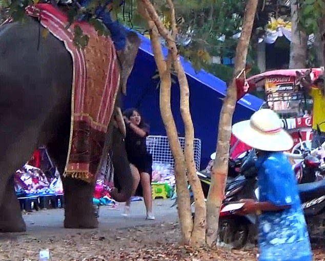 Рассвирипевший слон взял девушку в заложницы Видео