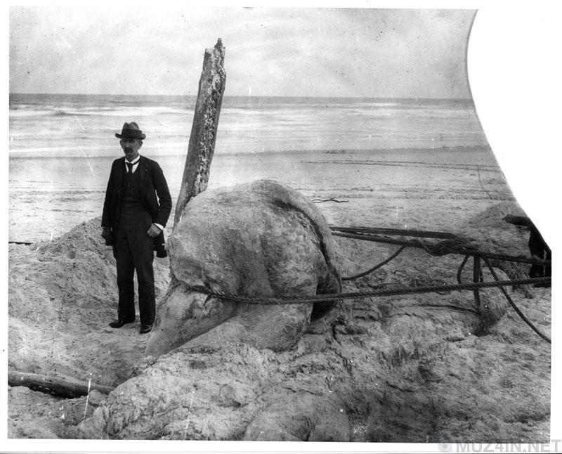 Глобстеры: морские монстры, выбрасываемые на берег познавательное