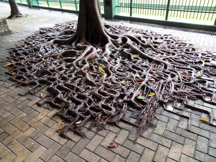 10 «крутых» деревьев, которые отказались умирать путешествия