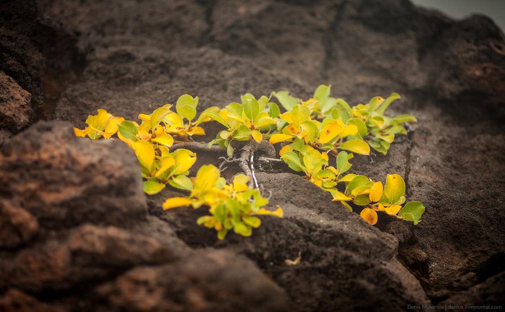 Вулкан Горелый на Камчатке природа