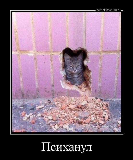 Веселые ночные котики в демотиваторах для улыбки перед сном