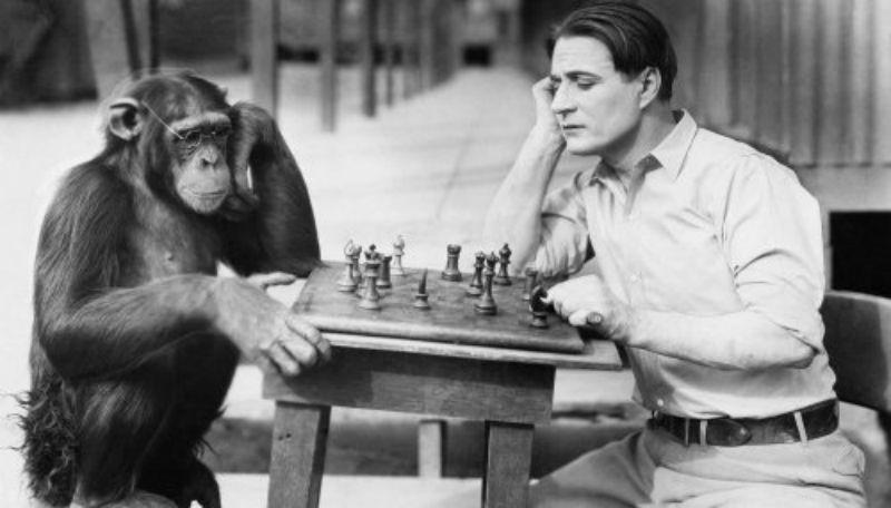 В США 100 лет назад скрестили человека и шимпанзе история