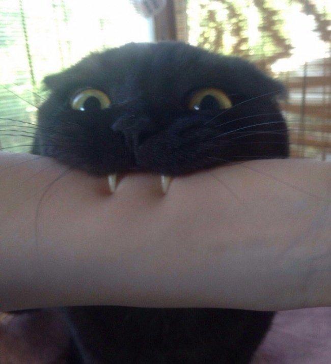 15 лучших фото, которые показывают всю суть кошачьего бытия Фотография