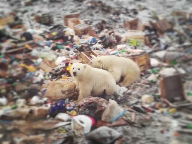 Эти фотографии шокировали Европу - нашествие медведей