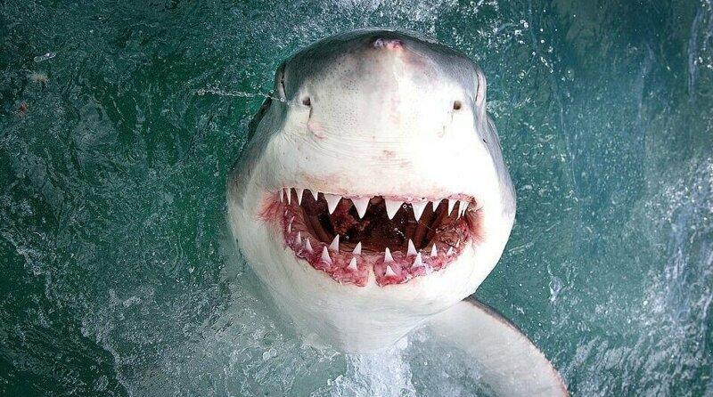 Калифорнийский фотограф заглянул в пасть морскому дьяволу