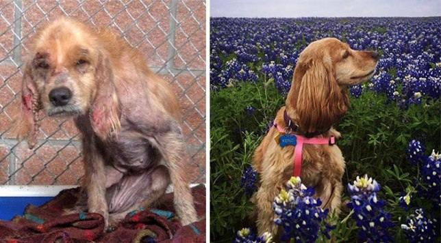 Вот как выглядят собаки после того, как наконец обрели любящих хозяев доброта