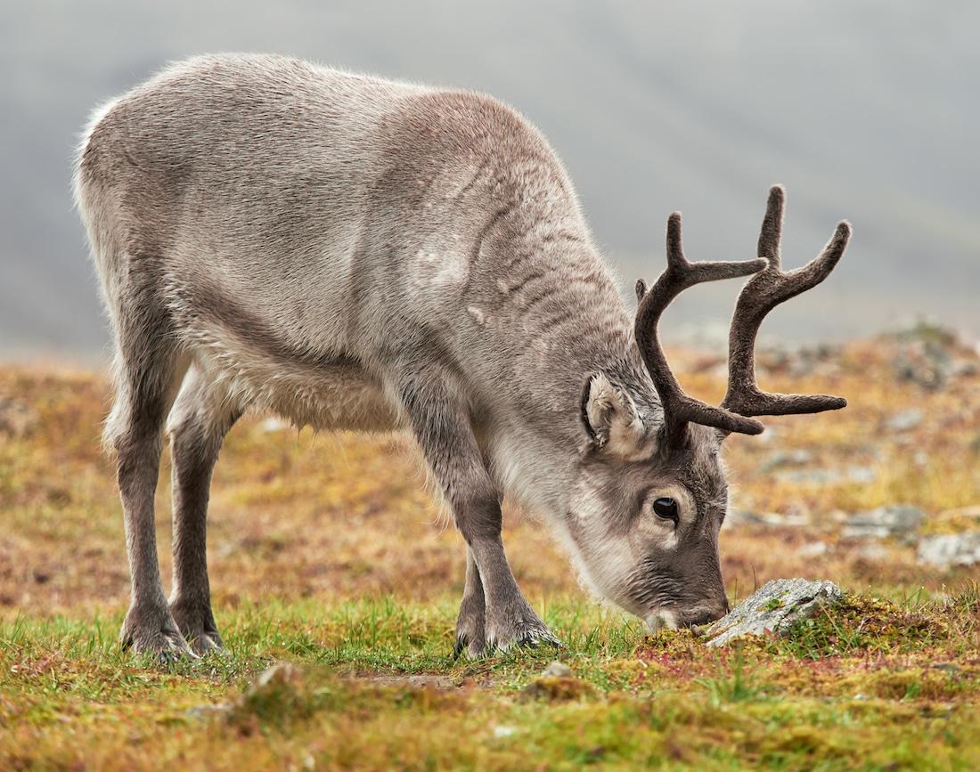 19 пейзажей из Арктики - места, где всегда тихо, одиноко и божественно красиво арктика