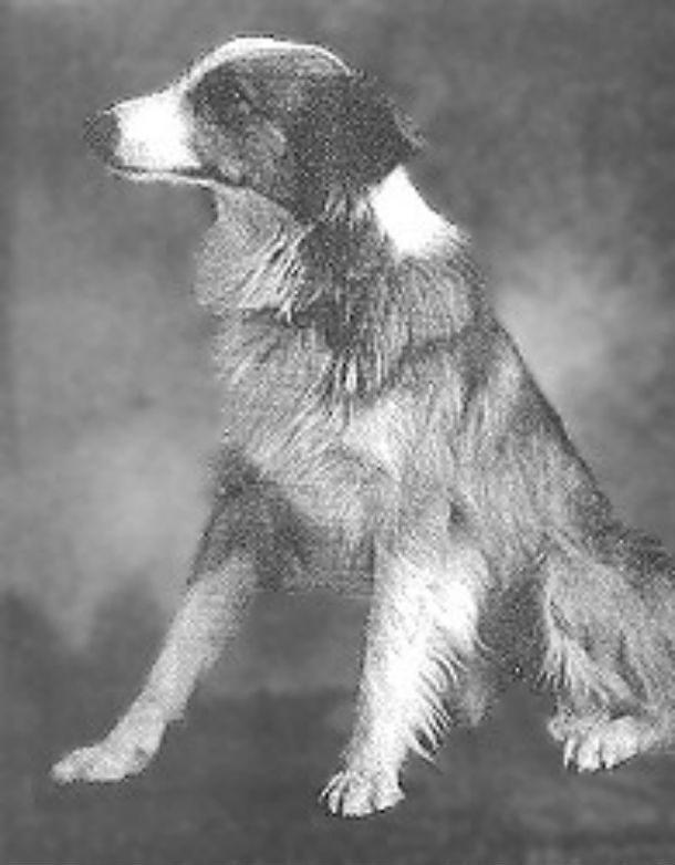 14 самых известных собак в истории животные