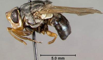 Самые страшные насекомые в мире животные
