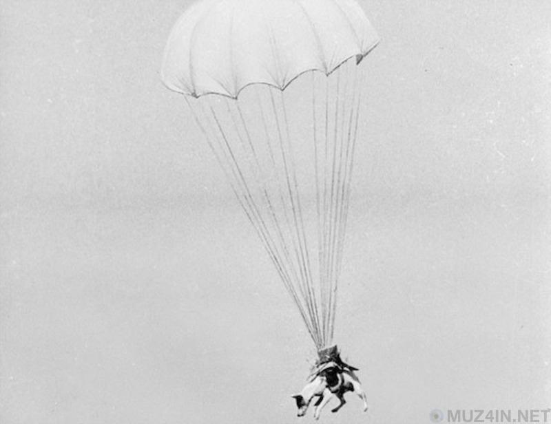 Странная история о парасобаках Второй мировой войны Познавательное